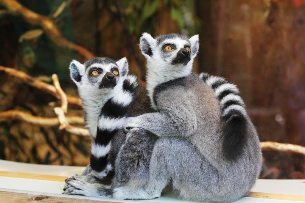 Kevesebb mint egy hónap múlva nyit az új pécsi állatkert