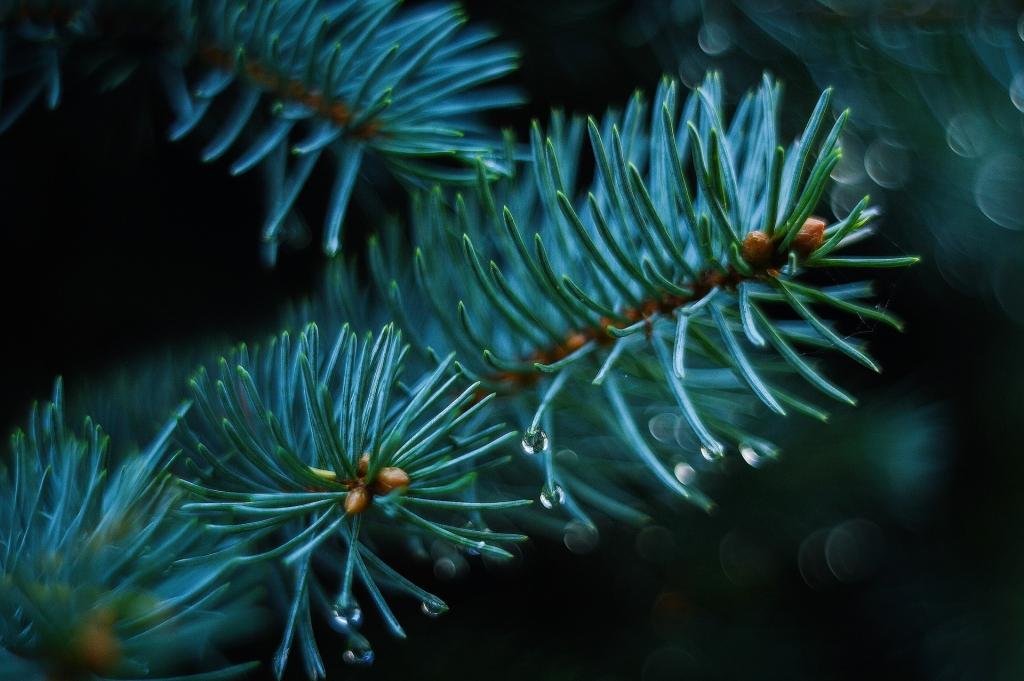 Környezettudatos karácsony – gyermekeket várnak fát díszíteni