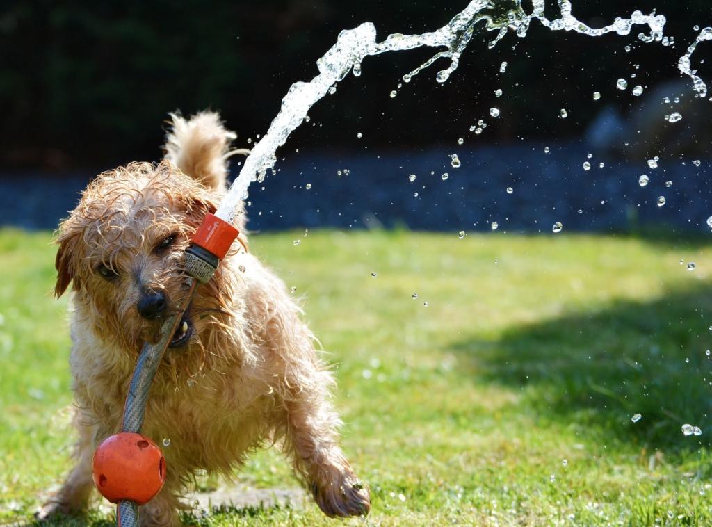 Kutyameleg: az állatokat is hőguta fenyegeti