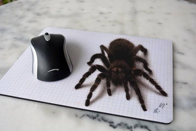 Le mernéd csapni ezt a pókot? Vigyázat! Illúzió!