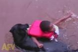 A kutya megmenti a kis srácot a vízből - akár akarja, akár nem