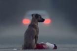 Lélekmanipulátor - így tesz állatbaráttá egy videó!