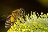 Méhek fenyegették az ovisokat