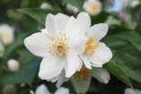 Hat növény, amely jót tesz az egészségünknek