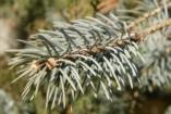 Karácsony: műfenyő vagy valódi fa?