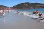 VIDEÓ: Delfinmentés Brazíliában
