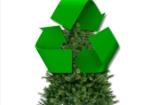 Mit tegyünk a karácsonyfákkal - környezettudatosan?