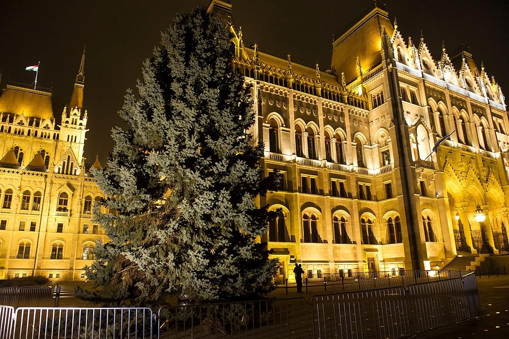 Felállították az ország karácsonyfáját a Parlamentnél