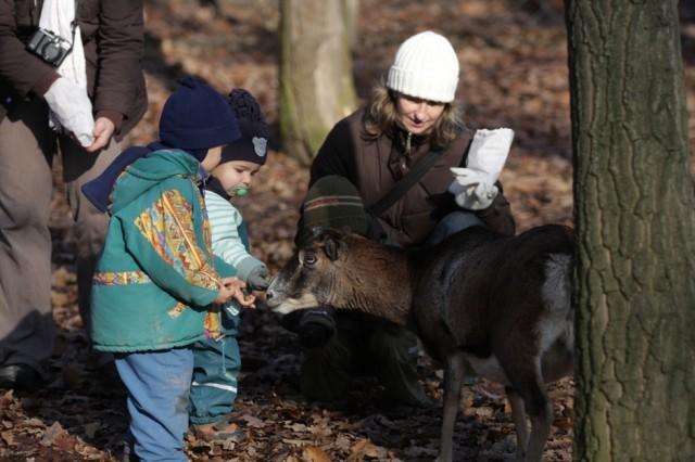 A gyerekek imádják a Vadaspark állatait. Forrás: Budakeszi Vadaspark