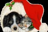 Állatok Karácsonya – a négylábúaknak gyűjtenek a NOÉ Állatotthonban