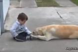"""Elképesztően megható, ahogy ez a kutya """"gyógyítja"""" Down-szindrómás kisgazdáját!"""
