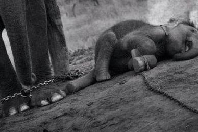 Vér és szenvedés a kulisszák mögött – a Ringling Cirkusz sötét titkai