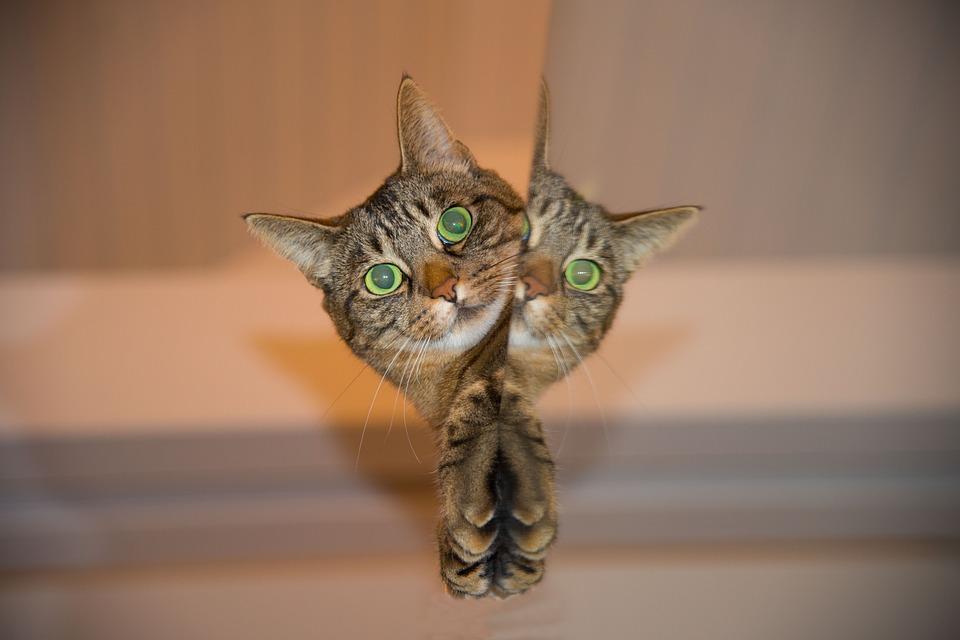 Jobb, ha macskák közelébe sem merészkedik a kismama? A toxoplazmózisról