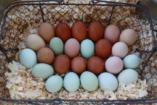 6 tipp az öko és etikus húsvéthoz