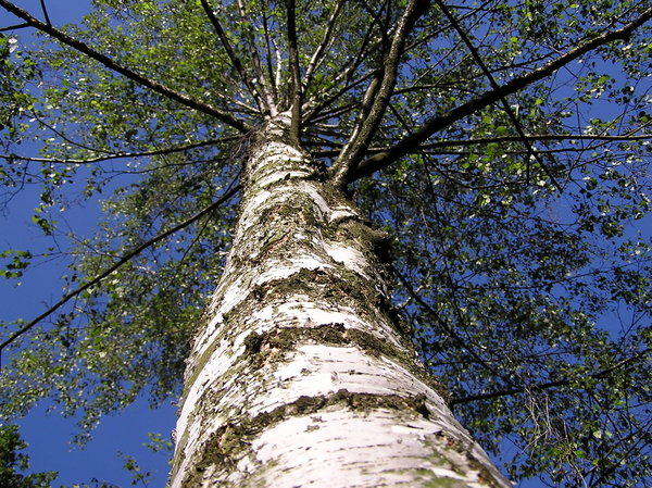 A mese jelentősége, avagy út az égig érő fa tetejébe