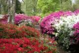 Most érdemes sétálni a rododendronok völgyében