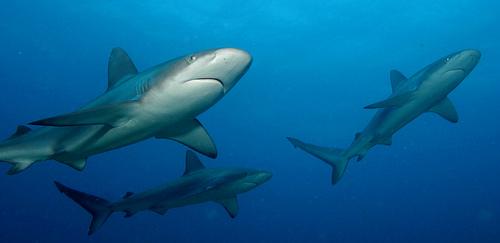 A cápa jó az allergiára?