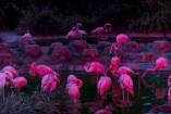 Állatkertek Éjszakája 2017. augusztus 25-én