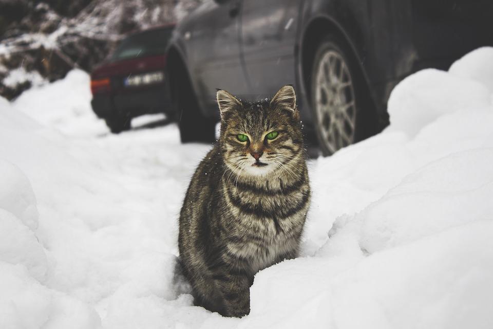 Hogyan készíts téli fekvőhelyet a kinti macskátoknak?