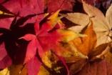 Népi bölcsességek, amelyek formálják a gyerek gondolkodását: 33 közmondás őszre