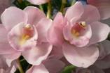 Őszi Orchidea és Bromélia Kiállítás és Vásár a Vajdahunyadvárban + JÁTÉK