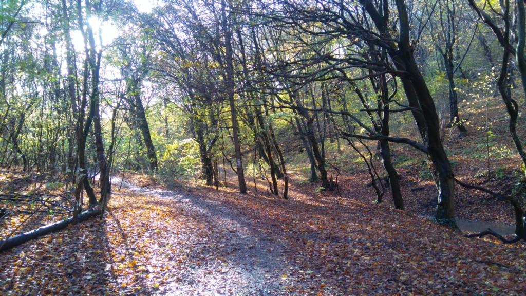 Egy fejedelmi udvarban - őszi séta a Remete-szurdoknál