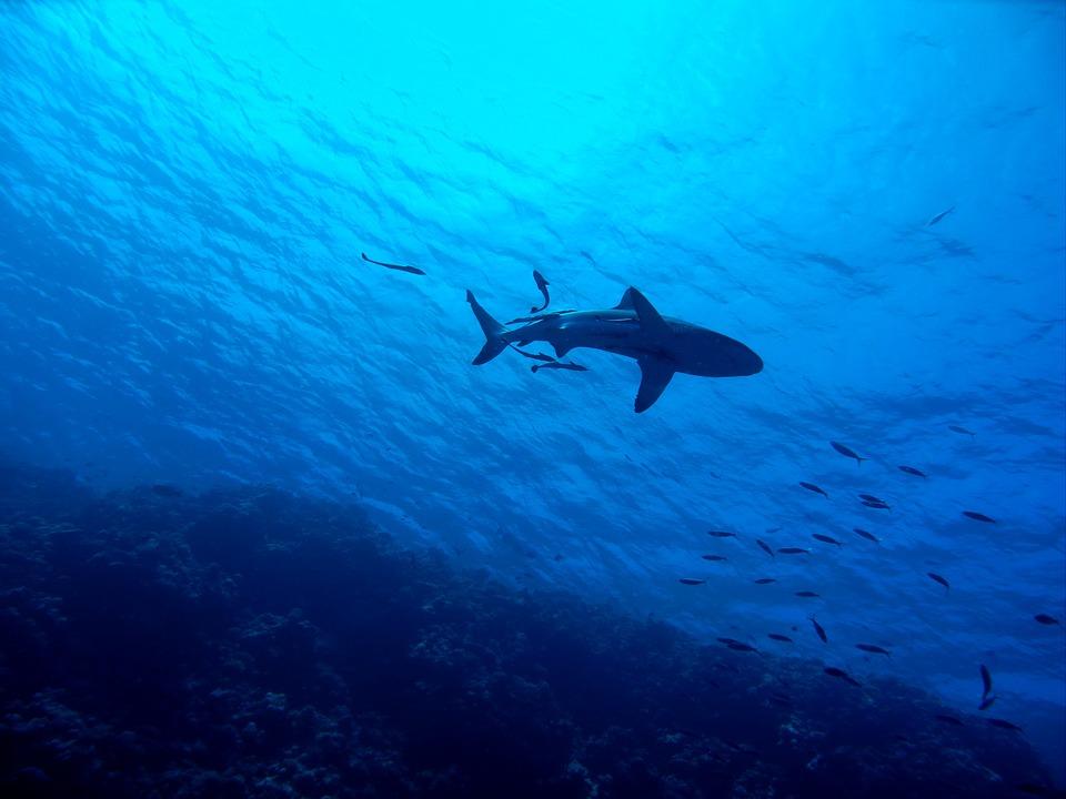 """""""Nem érdekelnek a cápák!"""""""