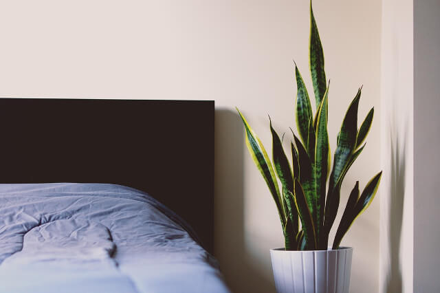 9 növény, aminek a hálószobában veszed a legnagyobb hasznát
