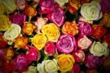 Rózsaünnep lesz a Fővárosi Állatkertben