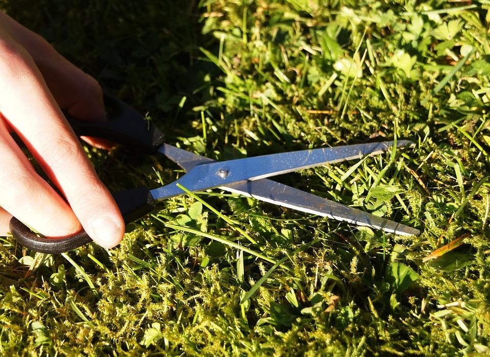 Ilyen legyen a kerted, hogy ne másszon be hozzátok kullancs