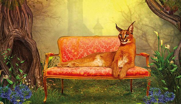 Bűvös erdő - interaktív kiállítás a Vajdahunyadvárban