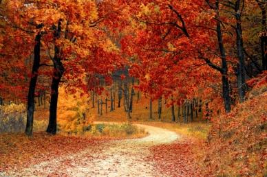 Itt az ősz, kiránduljunk!
