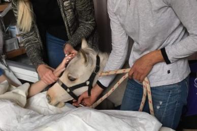 Különös vendég érkezett a Bethesda Gyermekkórház kórtermeibe