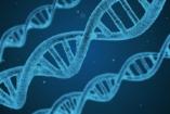 Felelőtlenség humán reprodukciós célokra használni a génszerkesztést