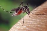 Chikungunya-láztól betegedtek meg izlandi turisták Spanyolországban